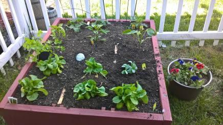 Image: Garden 1