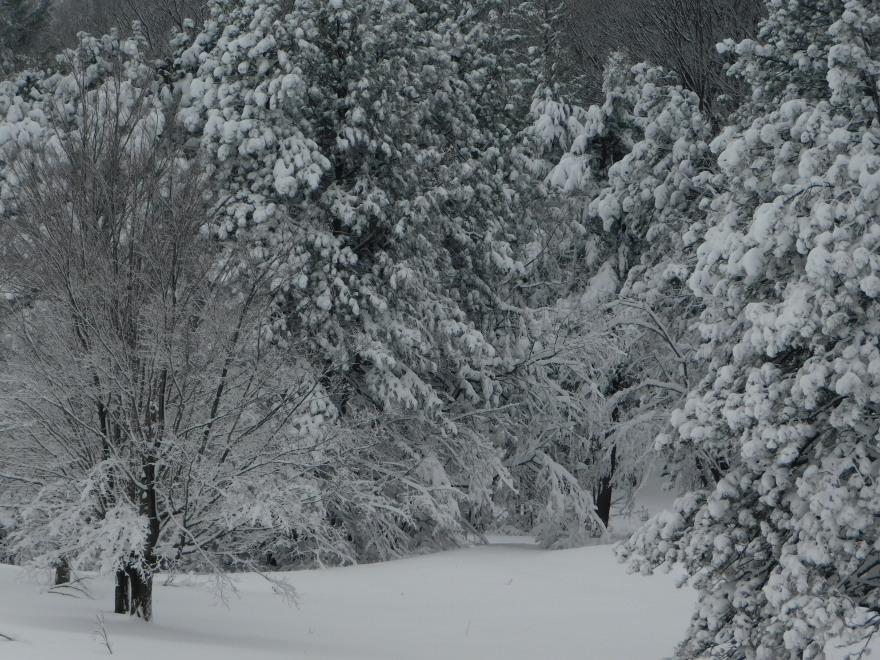 Winter Snow Day